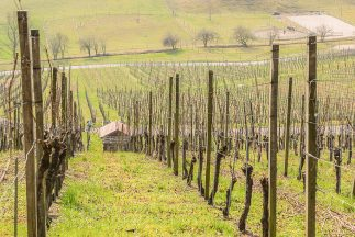 a non-wine drinker's guide to Napa Valley
