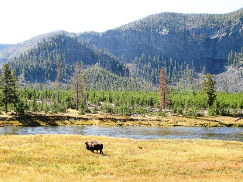 the ultimate travel guide to yellowstone