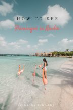 Flamingo Beach Aruba jannaonajaunt.com