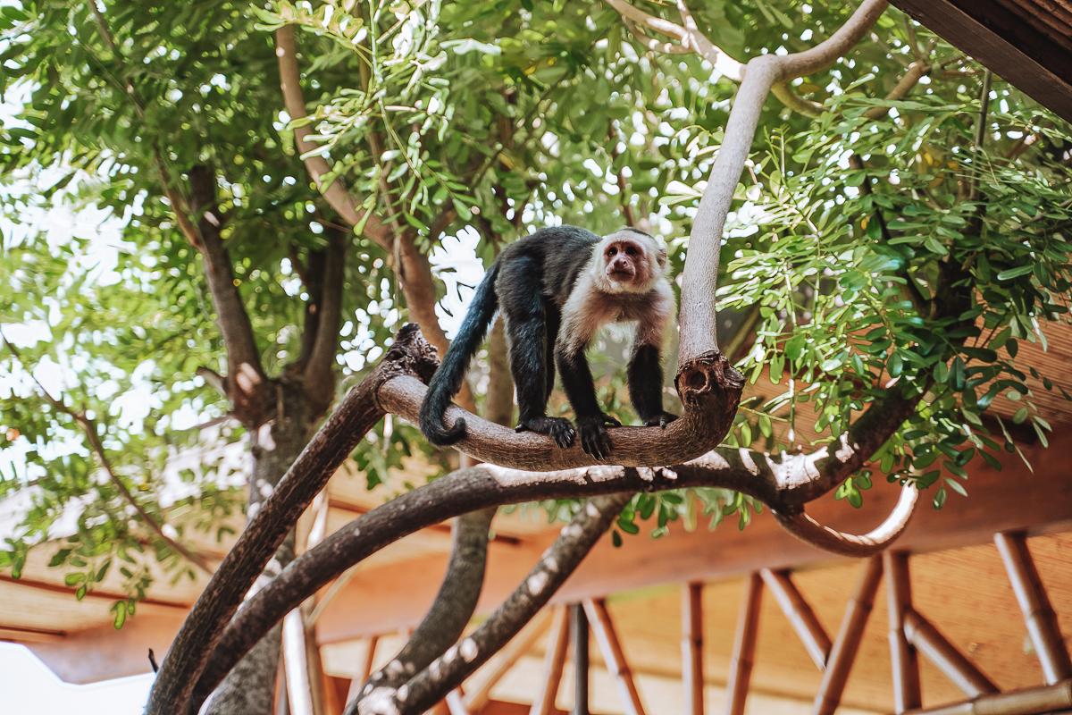 Andaz Costa Rica Monkey